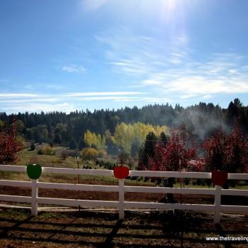 Apple Hill, El Dorado County