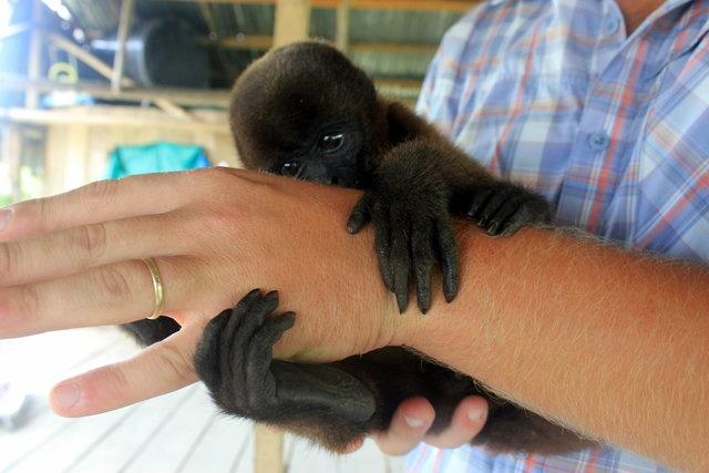 Baby Monkey, Iquitos, Peru