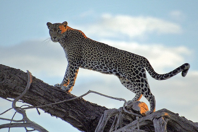 5 Things to Not Miss on Safari