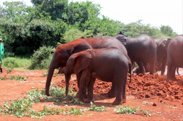 Sheldrick Wildlife Fund, Nairobi, Kenya