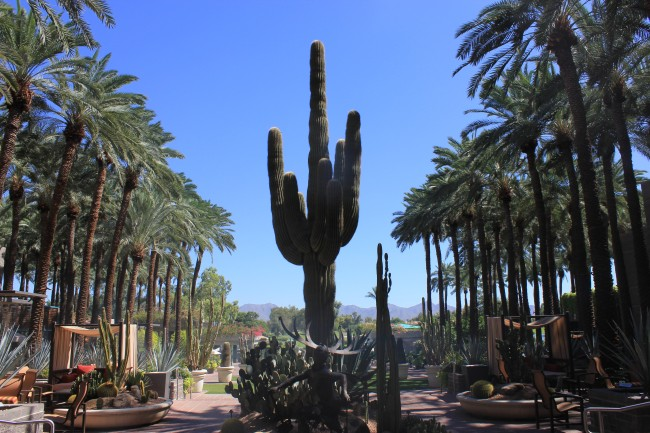 Layover in Phoenix, AZ