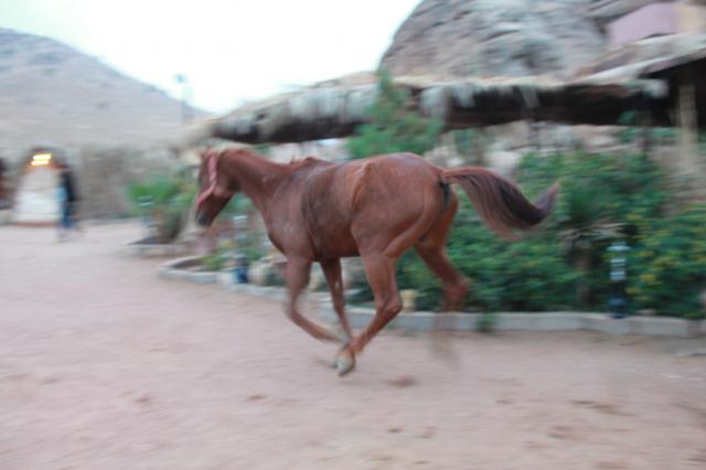 Seven Wonders Bedouin Camp, Jordan