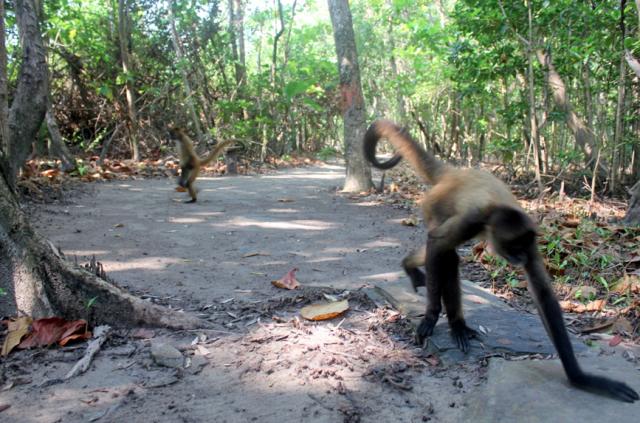 Jeanette Kawas National Park, Punta Sal, Honduras