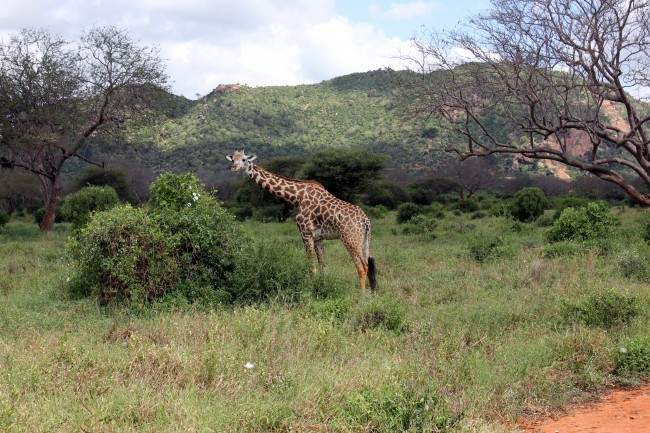 Safari in Kenya, Bucket List Experiences