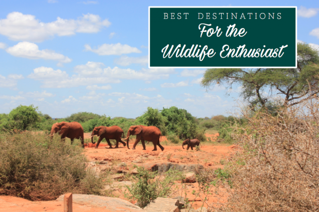 Top Destinations for the Wildlife Enthusiasts