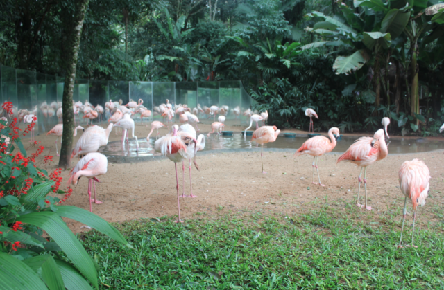 Parque das Aves, Brazil