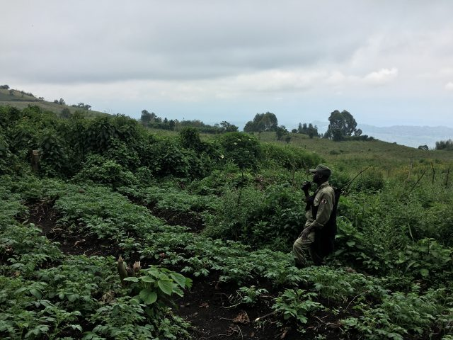 Gorilla Trekking in Africa, Virunga National Park
