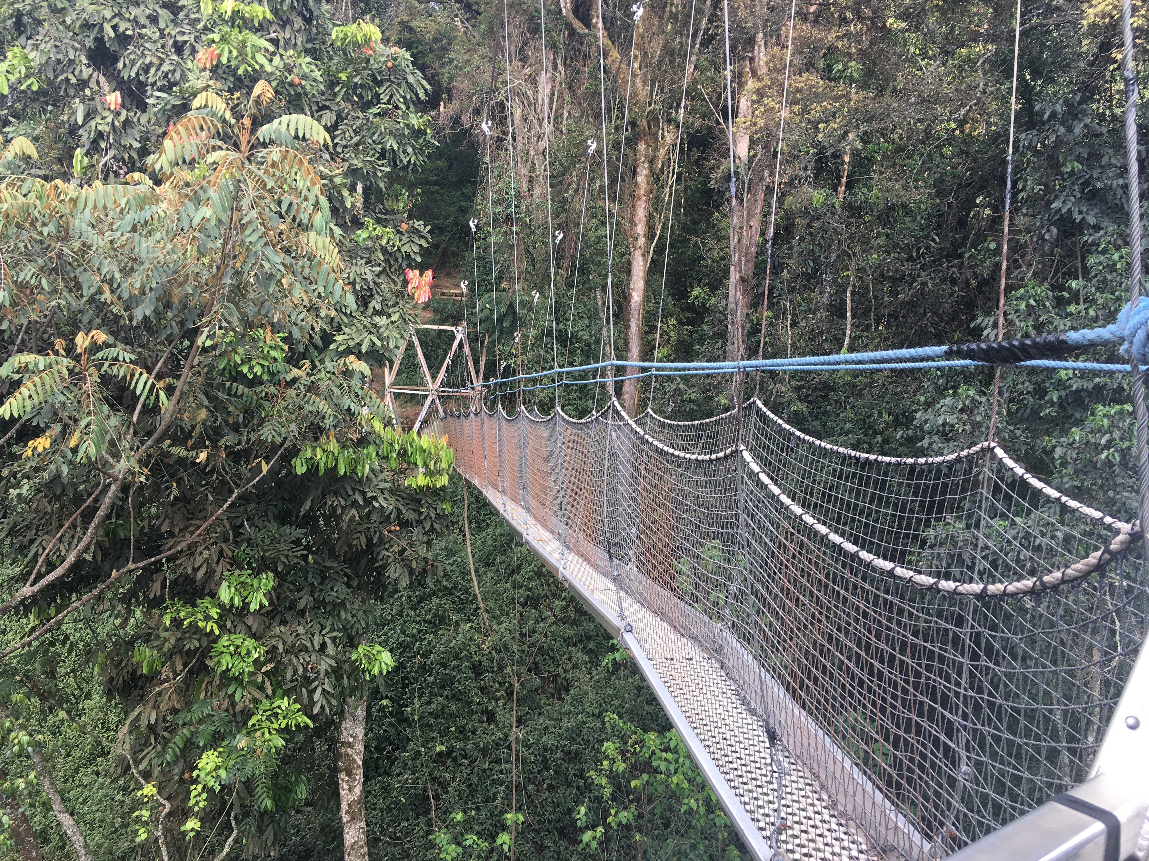 Finally we arrived at a series of three canopies one 45 meter canopy one 90 meter canopy and one 25 meter canopy all with views of Nyungwe Forest ... & Birds Eye View of Nyungwe Forest | The Wanderlust Effect