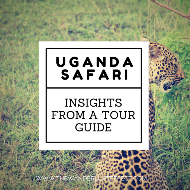 Insights from a Tour Guide