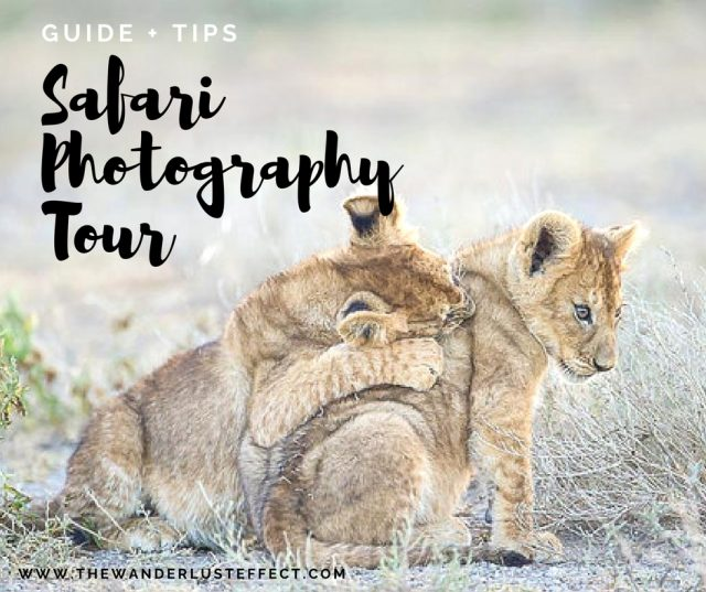 Tips for a Safari Photography