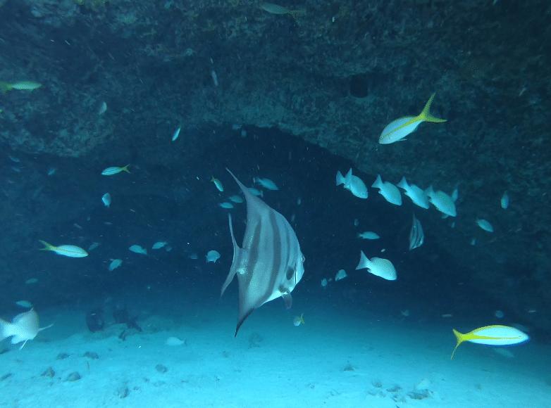 Snorkeling at Stocking Island