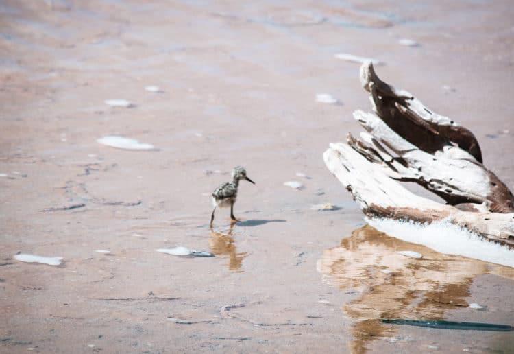 Bird watching in Anguilla