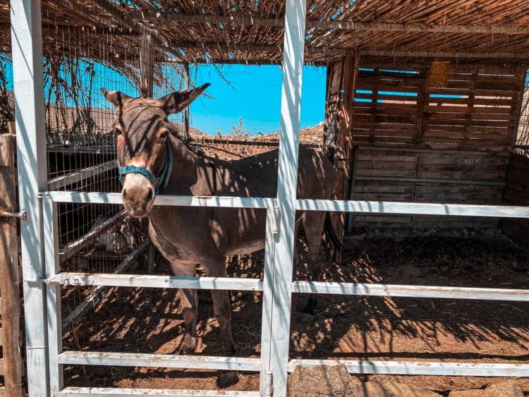 ATV Tour of Mykonos, Vioma Organic Farm and Winery