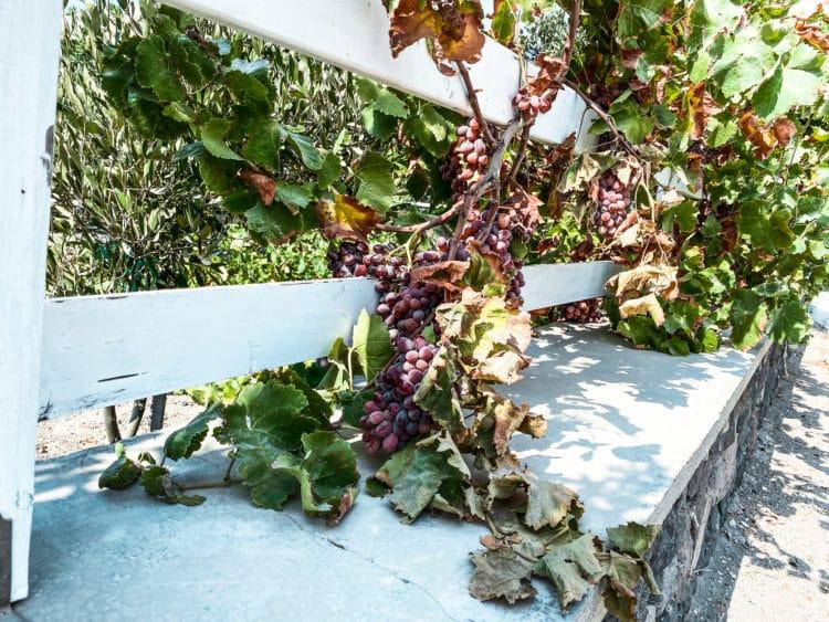 Self-Guided Wine Tasting Tour in Santorini, Gavalas Winery