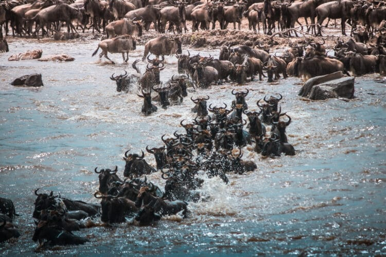 Great Migration in the Serengeti, Alex Walker's Serian Camp