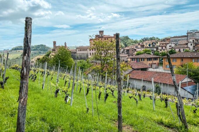 Wine Tasting in Barolo